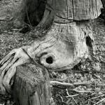 designreiche_Holz